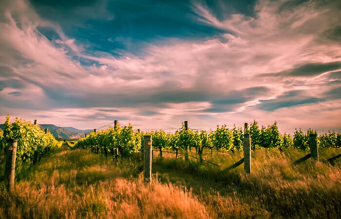 Wine tasting in Marlborough, New Zealand