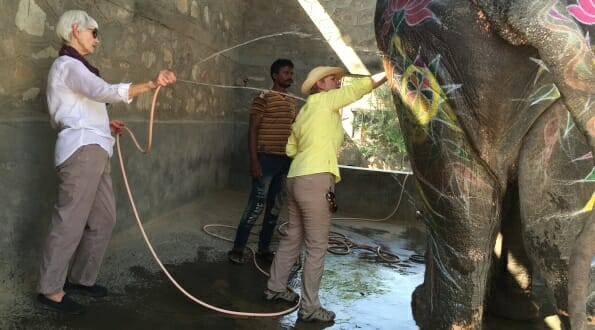 Washing an elephant at the sanctuary