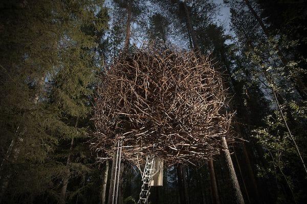 The birds nest accomodation